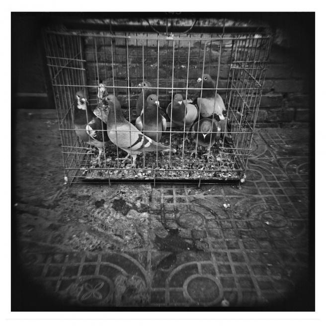 Art and Documentary Photography - Loading 010-ALLEMAN-INNER MONGOLIA-FOTOVISURA.jpg