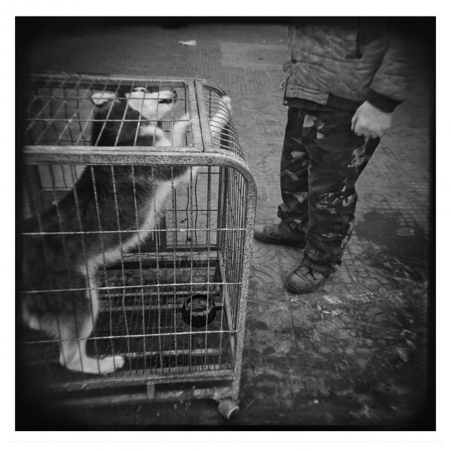 Art and Documentary Photography - Loading 011-ALLEMAN-INNER MONGOLIA-FOTOVISURA.jpg