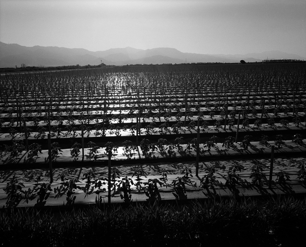 Art and Documentary Photography - Loading 20110412_PepperField.jpg