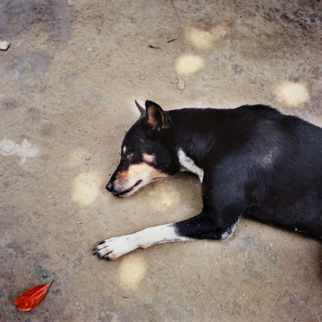 Art and Documentary Photography - Loading EHerman_BD_05-16_04.JPG