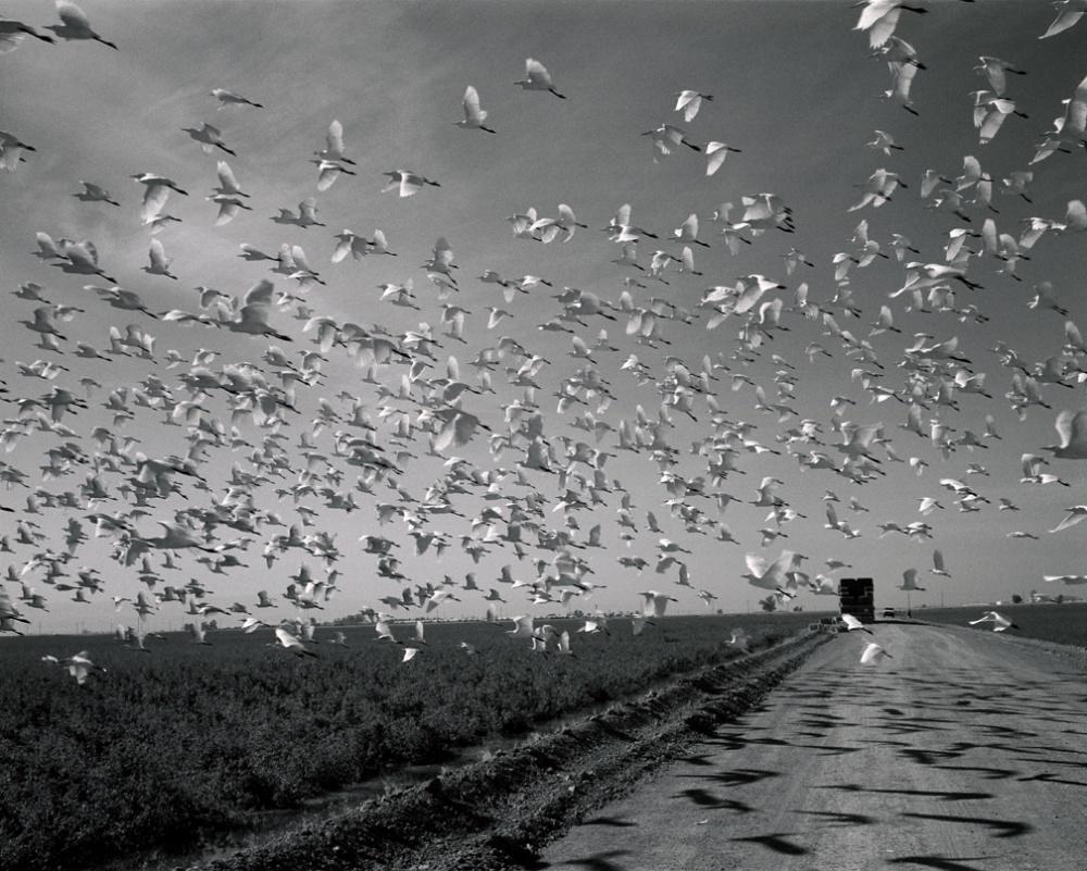 Art and Documentary Photography - Loading 20061113_ElCentroBirds.jpg