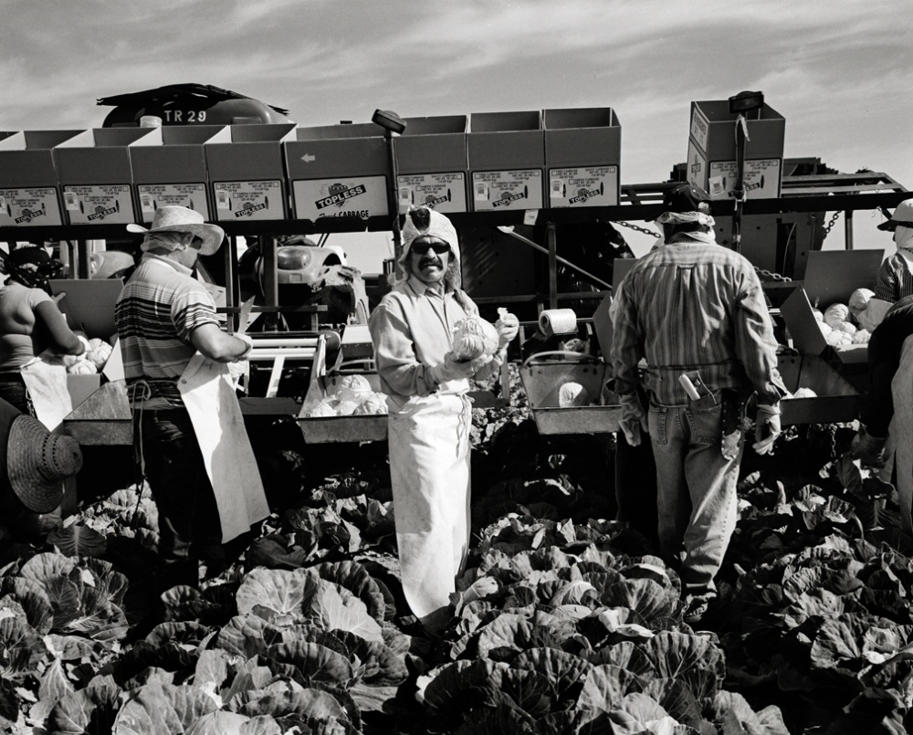 Art and Documentary Photography - Loading 20110419_CabbagePicker.jpg