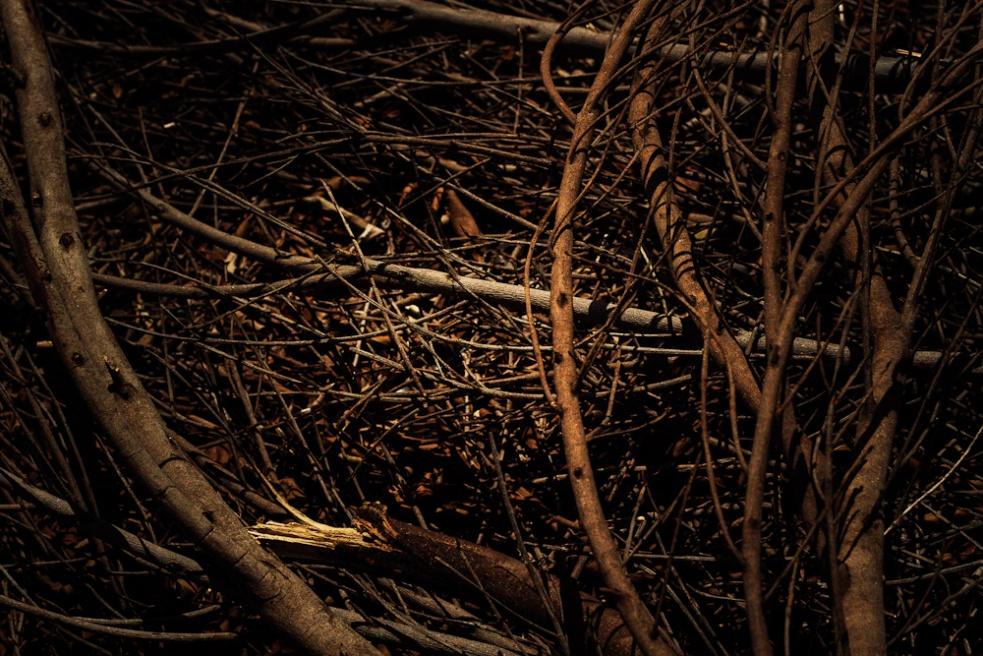 Art and Documentary Photography - Loading iwcl_shk_jdg-14.jpg
